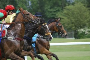 Courses PMU, parier et trouvez les chevaux gagnants avec le tarot